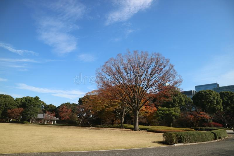 Autumn in Tokyo stock photography