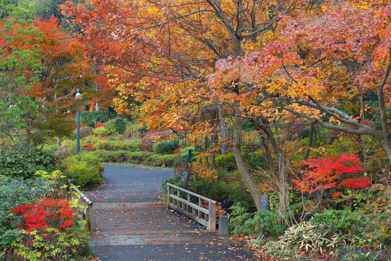 Tokyo Midtown autumn park. Autumn in Tokyo - maple tree orange foliage in Tokyo Midtown district royalty free stock image