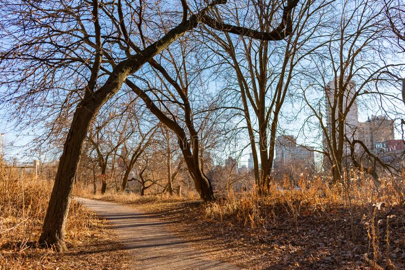 Autumn Trail con gli alberi nudi vicino allo stagno del nord in Lincoln Park Chicago fotografia stock libera da diritti