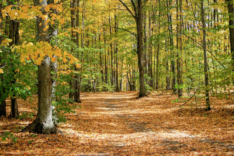 Autumn Trail Through das Holz lizenzfreies stockbild