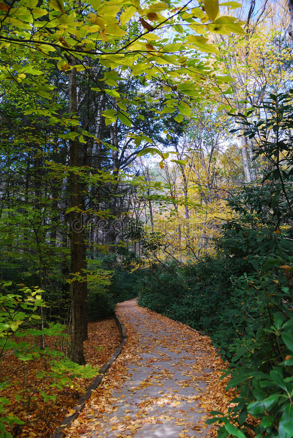 Download Autumn trail in forest stock image. Image of background - 16841611
