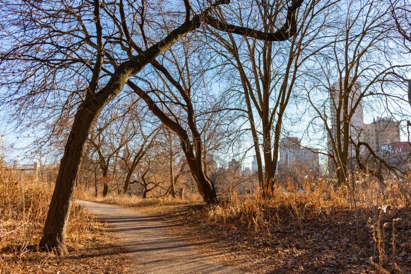 Autumn Trail med kala träd nära det norr dammet i Lincoln Park Chicago royaltyfri foto