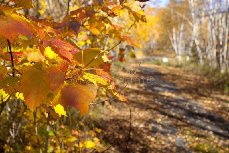 Autumn Trail in Minnesota royalty free stock photos