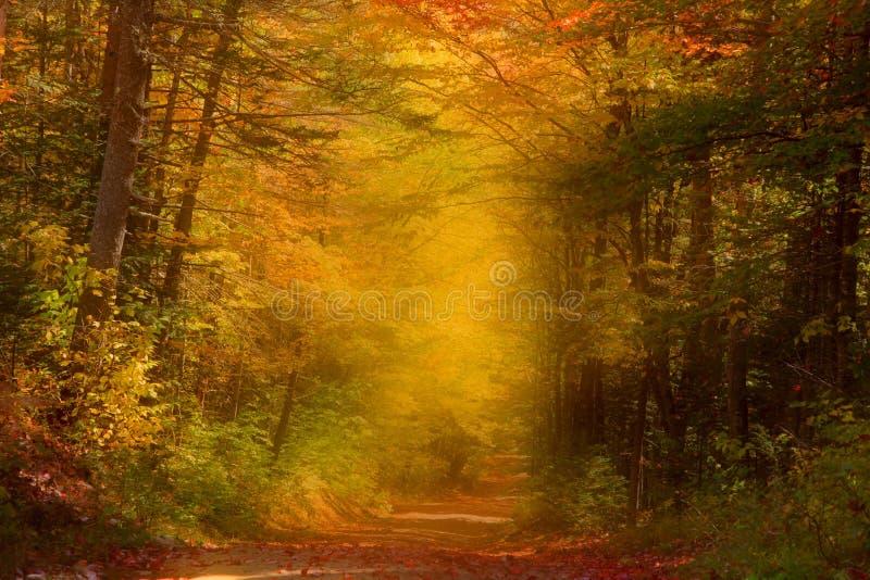 Autumn trail royalty free stock image