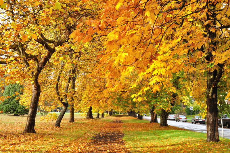Autumn trail in park royalty free stock images