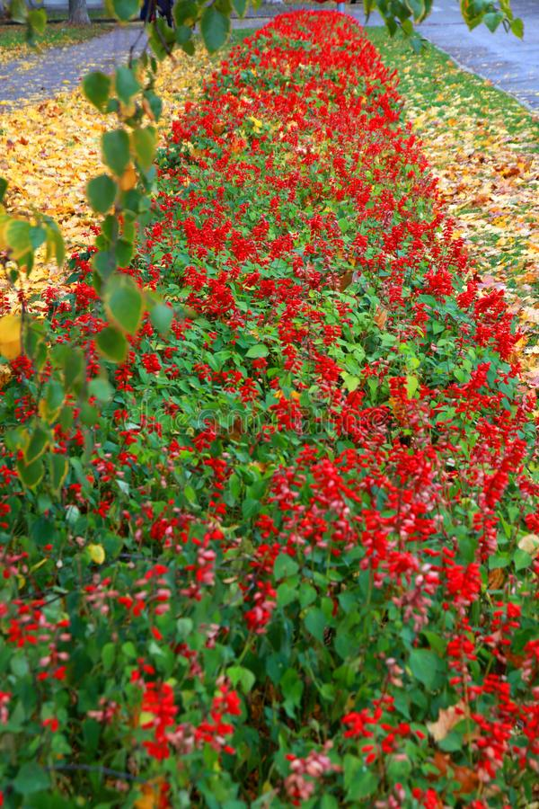 Autumn flower alley is living out its last days. Autumn transforms nature into fabulous places royalty free stock images