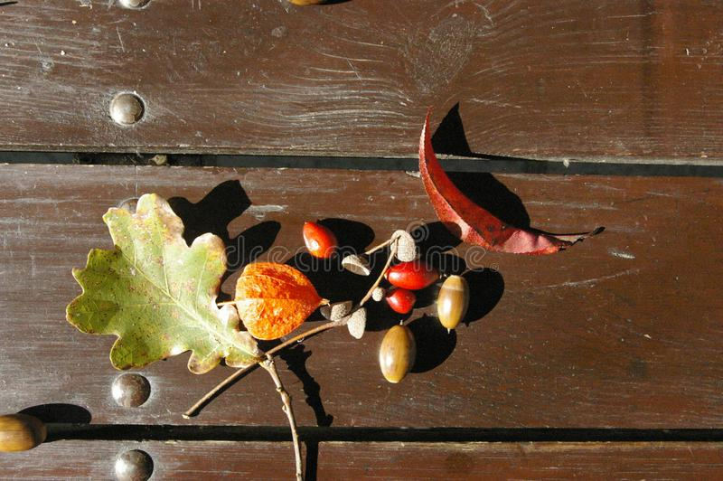 Autumn treasures royalty free stock photography