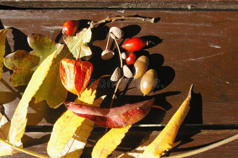 Autumn treasures on table royalty free stock photos
