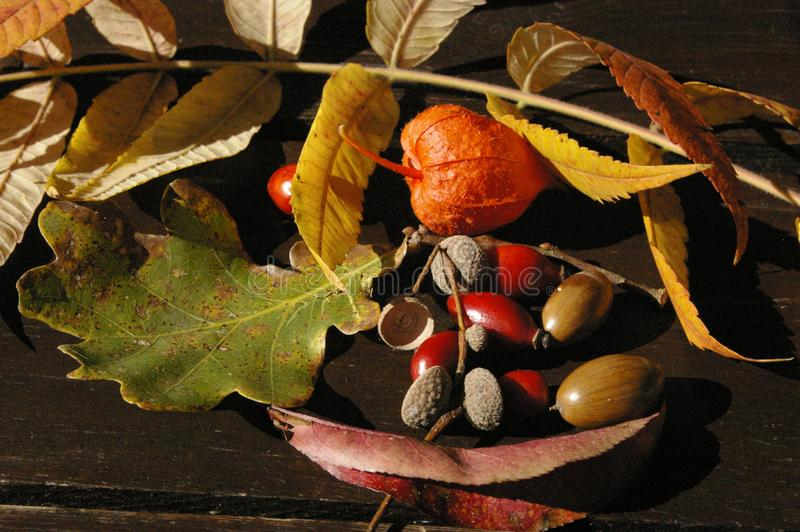 Autumn treasures on table royalty free stock images