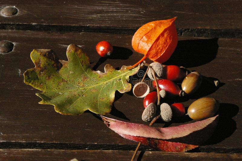 Autumn treasures stock photography