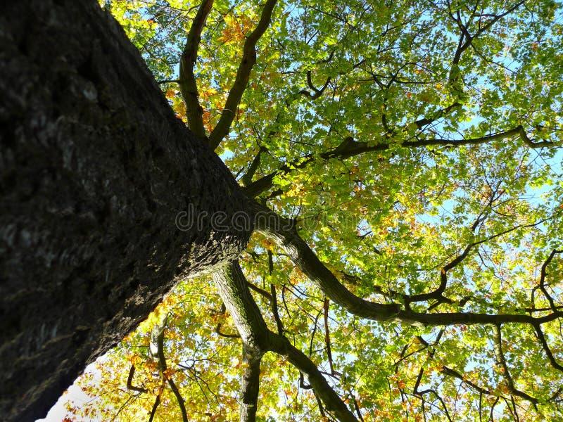 Download Autumn tree stock image. Image of seasonal, season, natural - 11404617