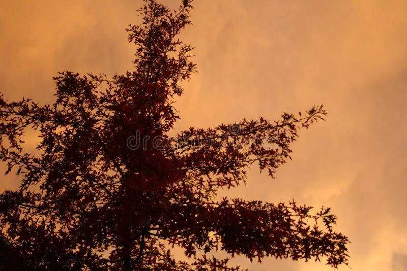 Download Autumn Tree stock image. Image of dark, depressed, tree - 12403505