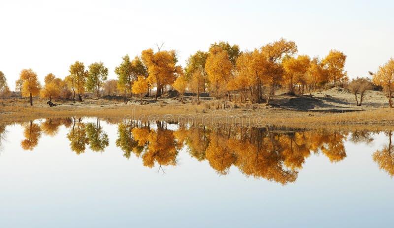 Autumn tree. By a mirror river,shoot at xijiang,China stock photos