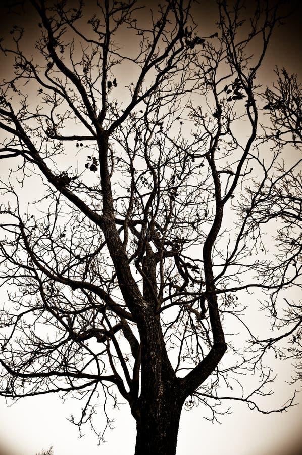 Autumn Tree. Black and white tree in autumn stock photo
