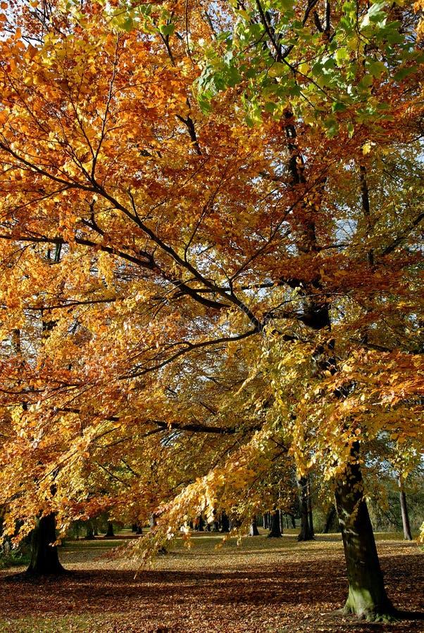 Autumn Tree. stock photo