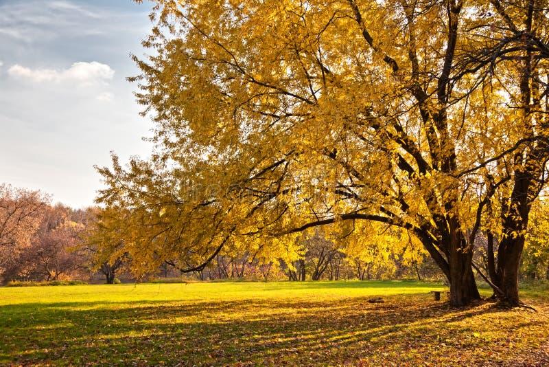 Download Autumn tree stock image. Image of season, cloud, november - 22363577
