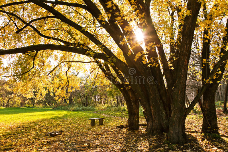 Download Autumn tree stock image. Image of scenery, outdoor, branch - 22363731