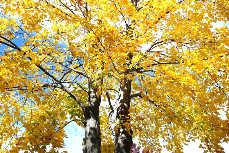 Download Autumn tree stock photo. Image of leaves, colorful, fall - 28649476