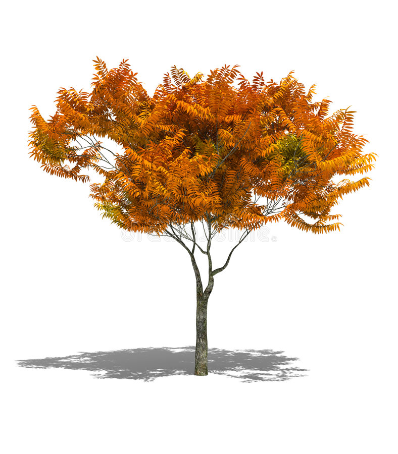 Download Autumn tree stock illustration. Image of forest, idyllic - 3295327