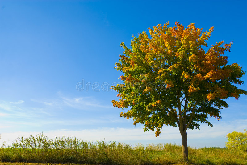 Download Autumn Tree Stock Photography - Image: 6578342