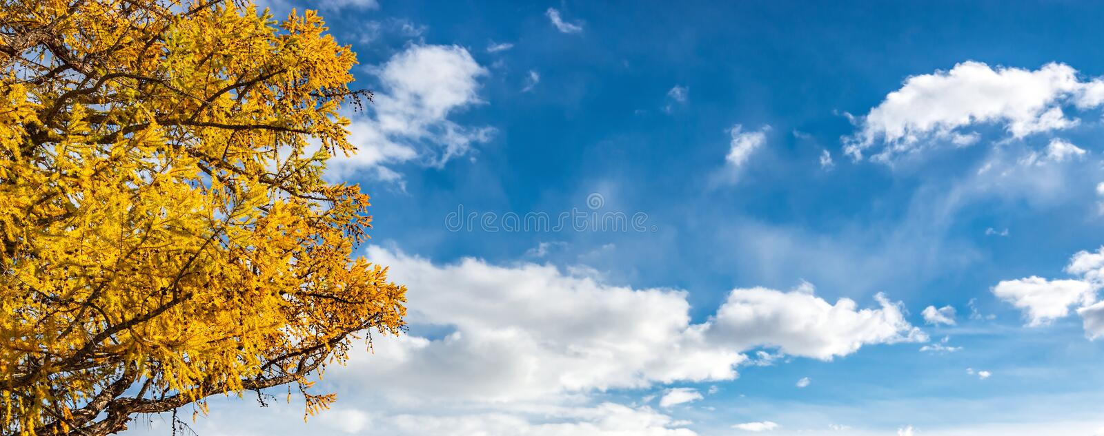 Autumn tree on a background of sky with clouds royalty free stock images