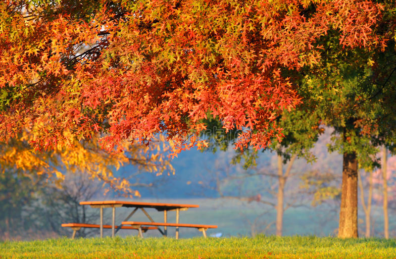Autumn tree bench stock images