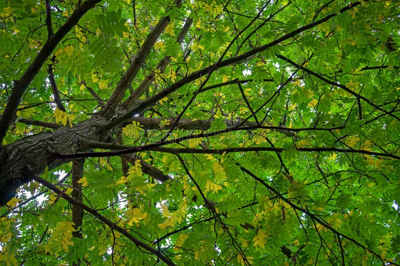 Autumn tree branches above with green, yellow and orange colors.  stock photography