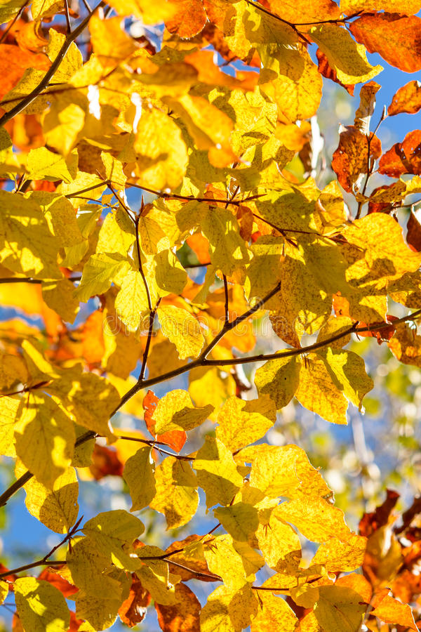Autumn tree - closeup stock photography