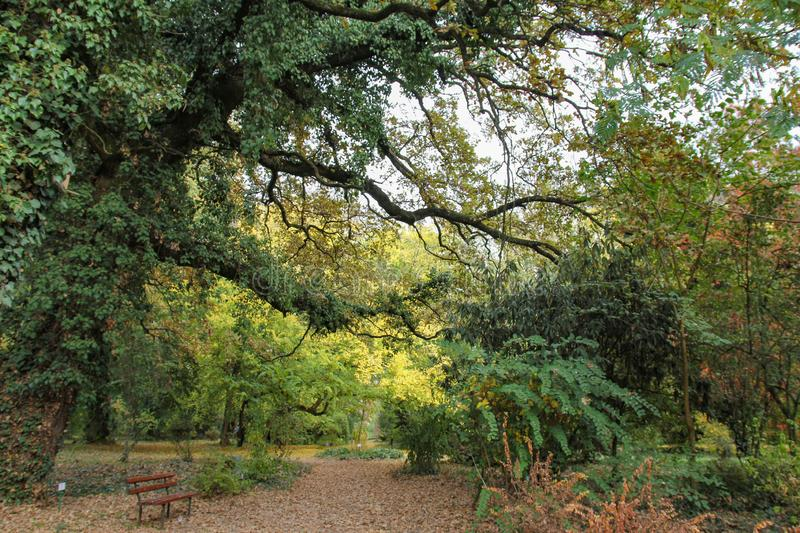 Autumn tree with colorful leaves at botanical garden. stock photography