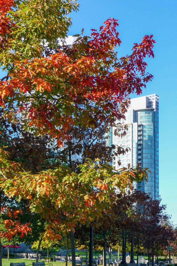 Download Autumn Foliage On Tree In Vancouver Royalty Free Stock Photo - Image: 38340885