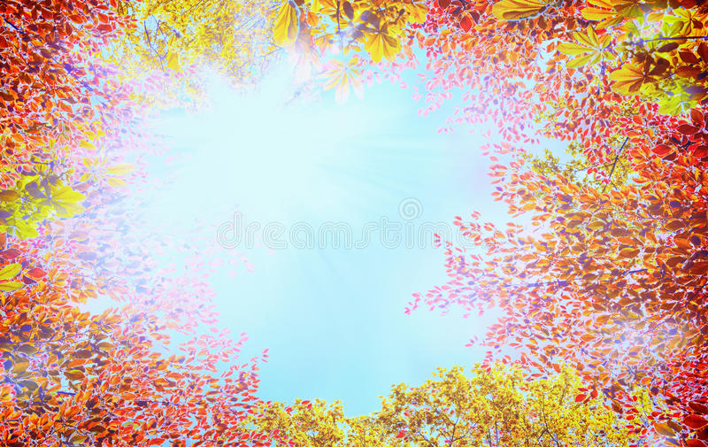 Autumn tree crown with colorful leaves on blue sky background with sunshine. Frame royalty free stock photography