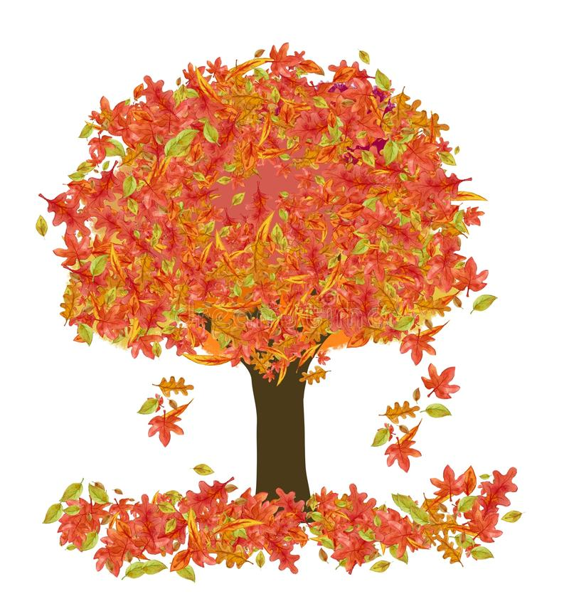 12 Most Colorful Trees in Fall With Bonus Features
