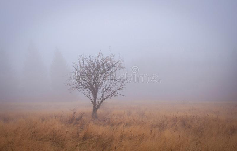 Autumn Tree in the Fog.  royalty free stock photo