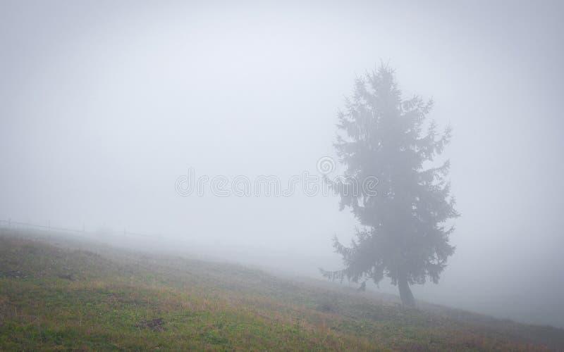 Autumn Tree in the Fog.  stock image