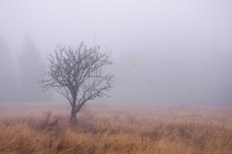 Autumn Tree in the Fog.  stock photos