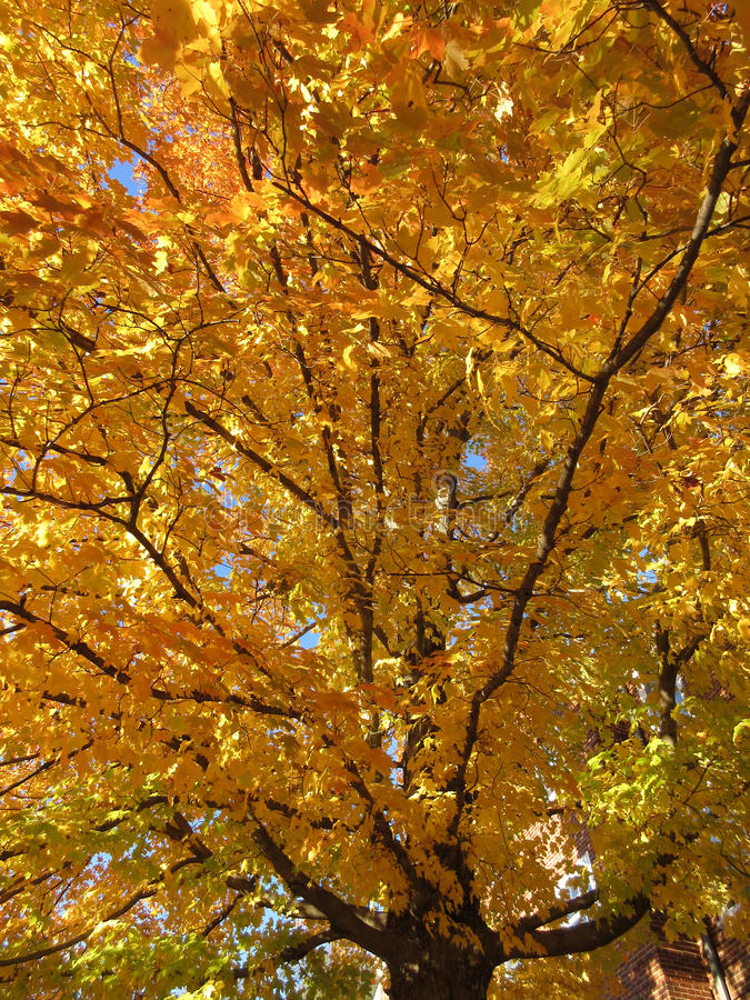 Autumn Tree grand et joli photo stock