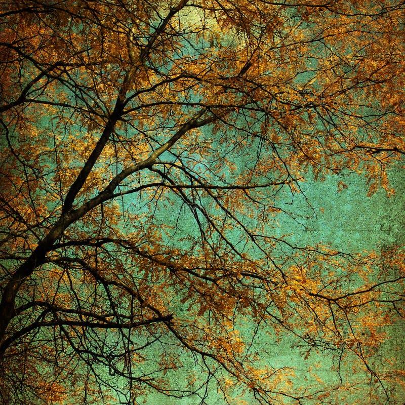 Autumn Tree Grunge lizenzfreie stockfotos