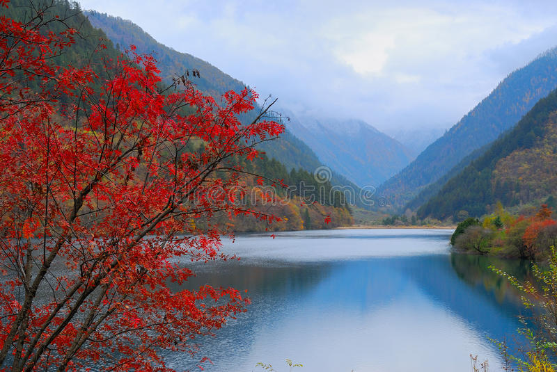Autumn tree and lake. The autumn leaves near lake. This beautiful landscape is at Jiuzhaigou Valley Scenic and Historical Interest Area royalty free stock image