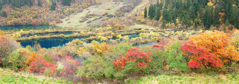 Download Autumn Tree And Lake  Panorama  In Jiuzhaigou Royalty Free Stock Photography - Image: 13925517