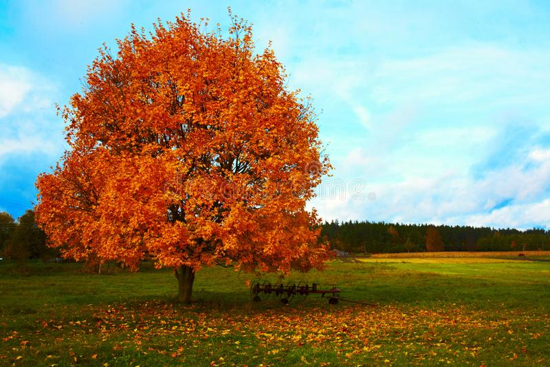 Autumn tree landscape stock images