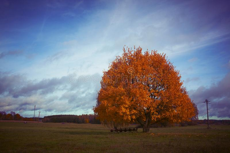 Autumn tree landscape stock photo