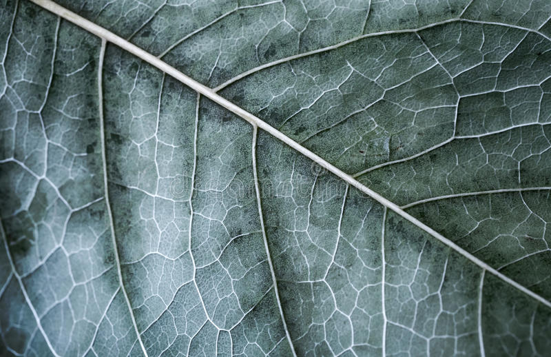 Autumn tree leaf, macro photo with selective focus stock image