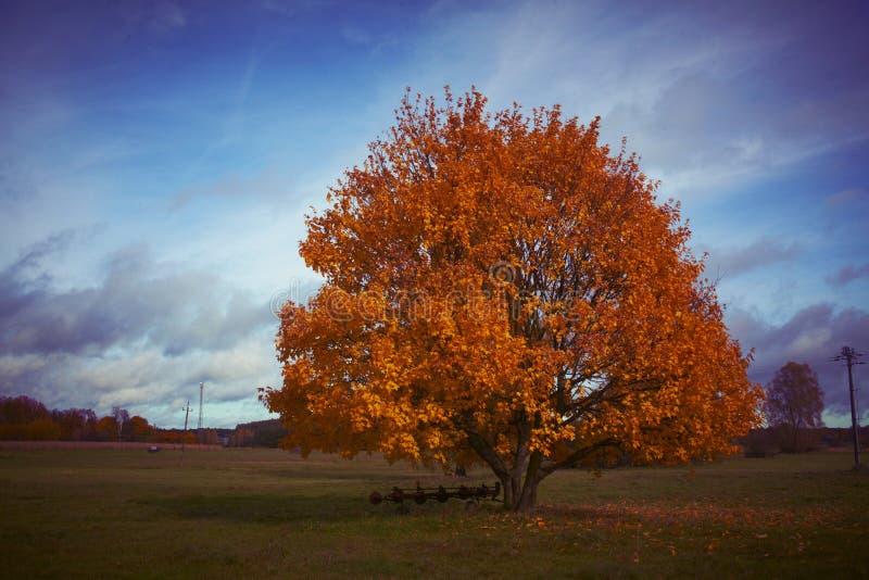 Autumn Tree nella campagna fotografie stock