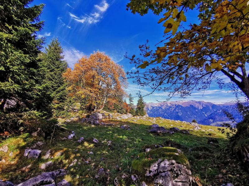 Autumn tree over Glarus in the Swiss Alps. Slopes of high mountains in the Glarus alps with fantastic fall color in the foreground and lake royalty free stock photo