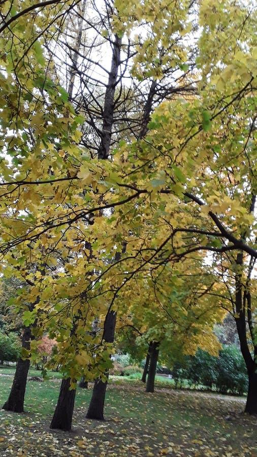 Autumn tree in park 2019. Nature stock photo