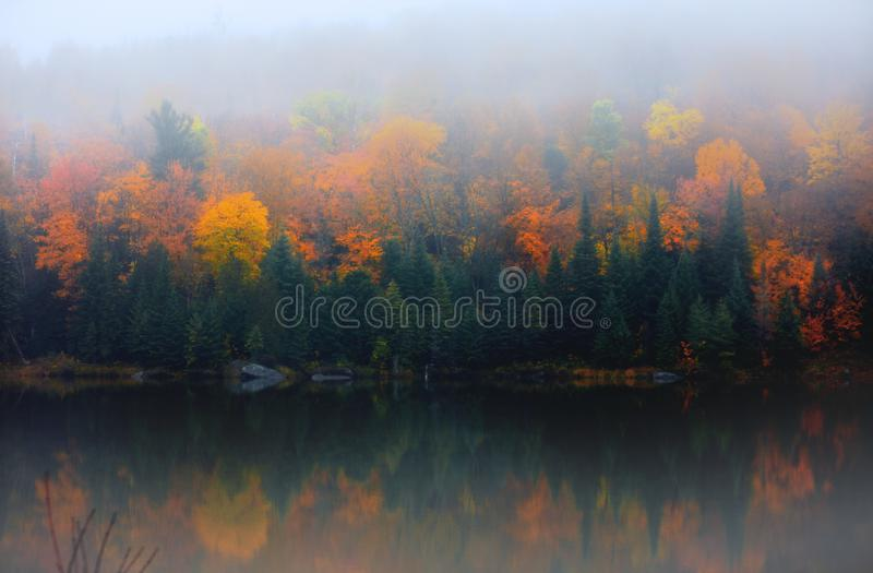 Autumn tree reflections in the lake with morning mist stock photography