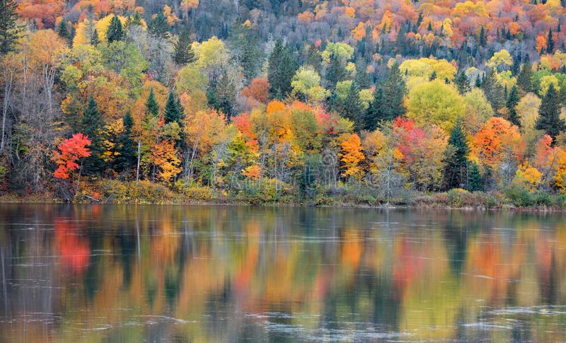 Autumn tree reflections in Riviere Saint Maurice stock photography