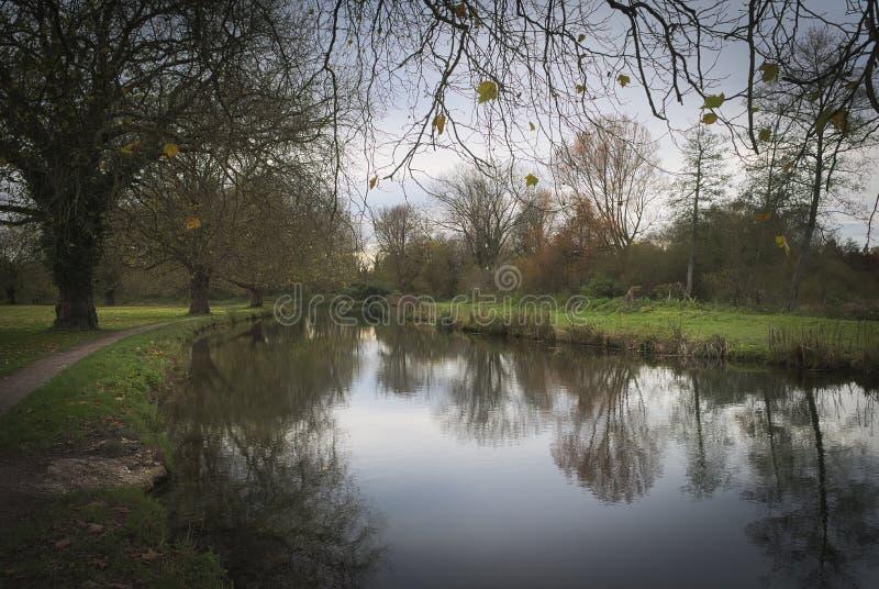 Autumn Tree reflexioner i den Winchester kanalen arkivbilder