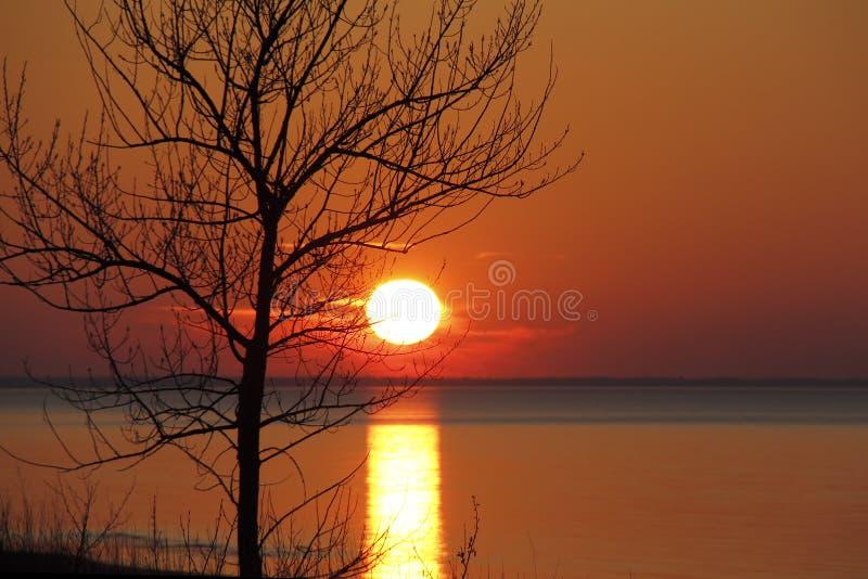 Autumn Tree Silhouetted por la puesta del sol del lago Hurón imagen de archivo libre de regalías
