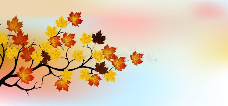 Autumn Tree With Sky Background Stock Photo